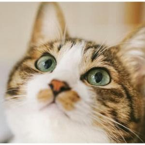 室内猫のマーキングとスプレー