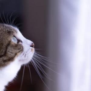 外猫駆除の牙城