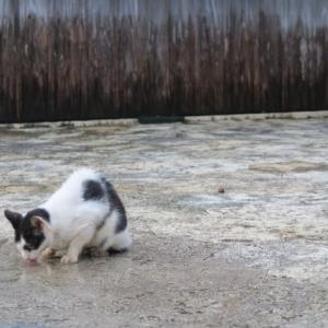 福島被災動物 浄財の行方