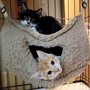 保護猫たちの緊急事態宣言