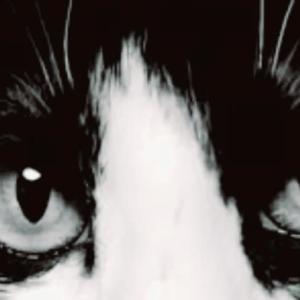 動物虐待動画像 拡散ストップ