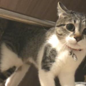猫の脱走防止術/ドライブの巻