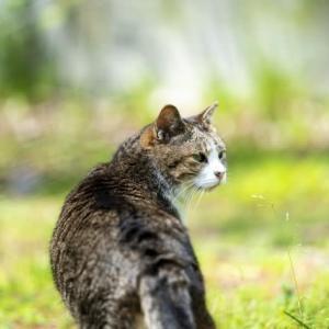 地域猫活動の基礎知識