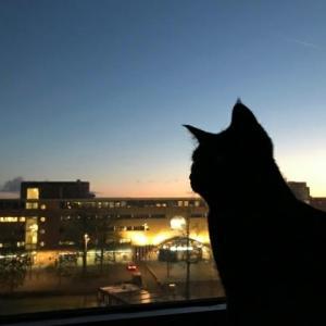 さくら猫の夜明け