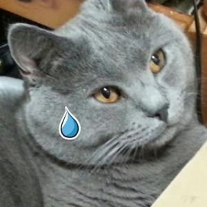 猛暑日は猫の熱中症に注意!