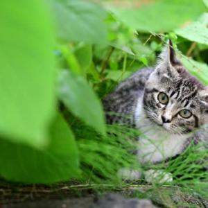 殺処分で野良猫が減らない理由