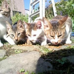 地域猫活動は誰のため