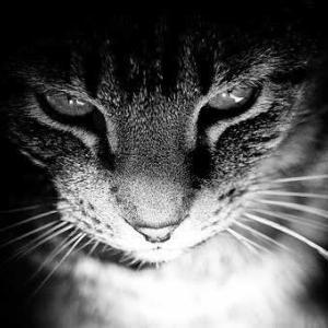動物のネグレクトは虐待にあたる犯罪
