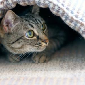猫の寒暖差ストレス対策