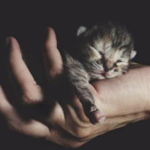 捨てられた赤ちゃん猫にできること