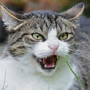 野良猫の駆除は犯罪~警察を動かすために~