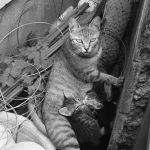 母さん野良猫の過酷な運命