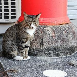 餌やりで野良猫は増えません
