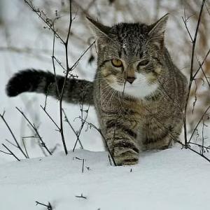 外猫 地域猫を凍死させないために