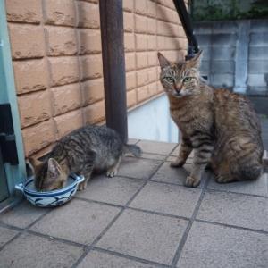 野良猫へ餌やるな!と言われたら