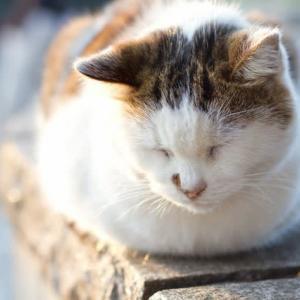 地域猫活動で助け合える社会へ