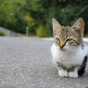 保護譲渡は解決策ではない 猫ノ型