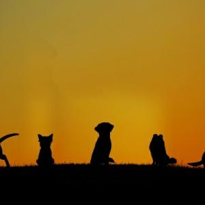 保護譲渡は解決策ではない 犬ノ型