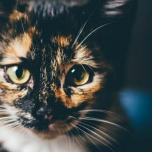 31日はサビ猫の日