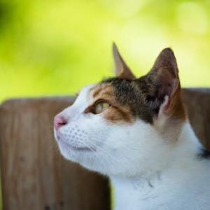 なぜ地域猫活動は問題を解決できるのか?
