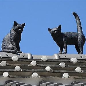 朔太郎の猫
