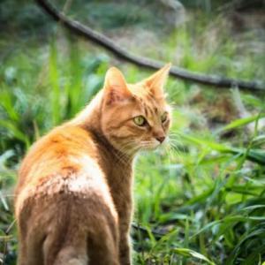 皆んなが幸せになれる地域猫活動