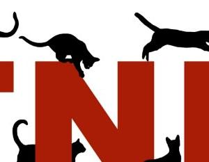 TNRと保護活動の違い