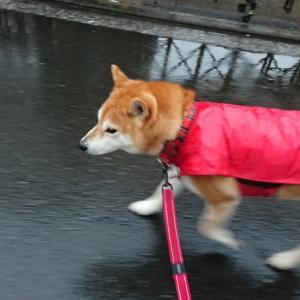 雨の日のあさんぽ