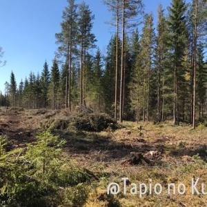 伐採後の森林といろんな石ころ