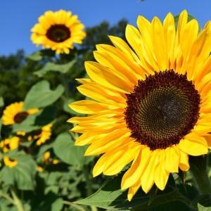 【認知症】何もできなくなる、何もわからなくなるわけではない|花の写真に興味を示す母