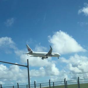 [協力希望]JALのアンケートに答えて、在住者の帰国をサポートしよう!