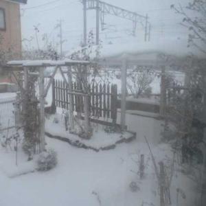そろそろ雪かき開始かな?