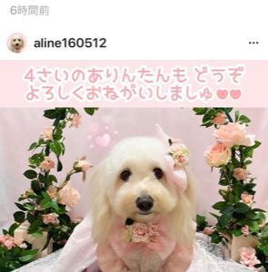 ありんちゃんのお誕生日(^^♪