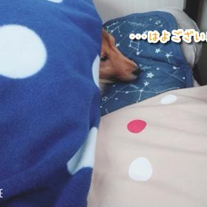 ニンゲン枕