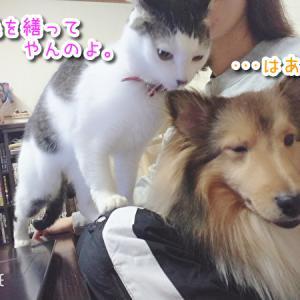 イヌとネコの攻防