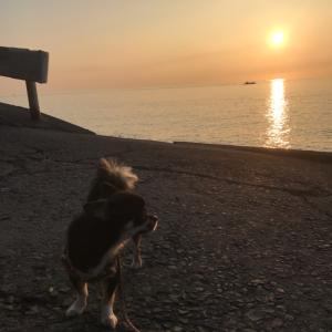 【旅レポ】シュノーケルでイカを見れて大興奮でした♫