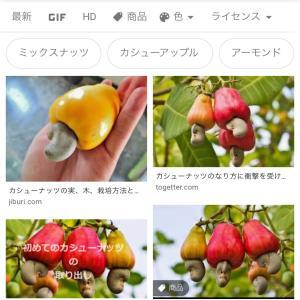 カシューナッツ〜