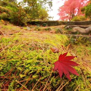 会津で紅葉狩りしてきた