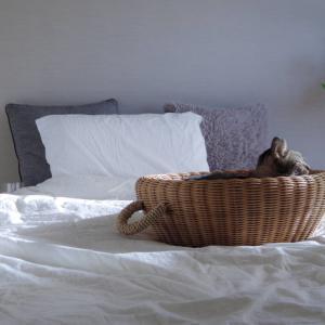 元を断つことの大切さ。寝具のアップデート