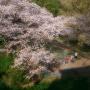 おばあさんと桜