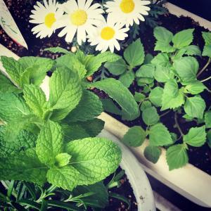 ミニ家庭菜園♪
