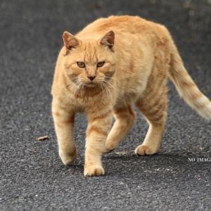 吾輩は猫である。名前はトラちゃん♪
