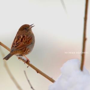 小鳥よ小鳥よ小鳥さん♪