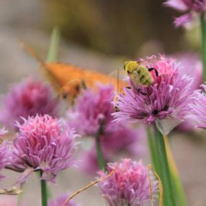 ハチの日♪