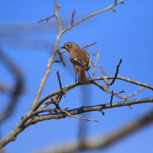 今日出会えた野鳥♪