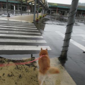 雨の日はアウトレット頼み