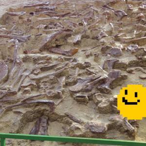 化石【huà shí】〜諸城で恐竜の化石がぎょうさん見つかるその理由?