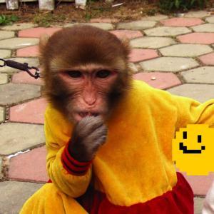 猴年马月【hóu nián mǎ yuè】〜「サル年ウマ月」には