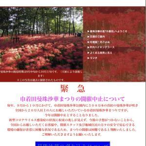 東京都の毎日のPCR陽性者数は、7万人中たった1人・・・コロナ感染する方が難しい!!