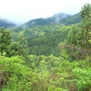一夜にして山が若緑色に